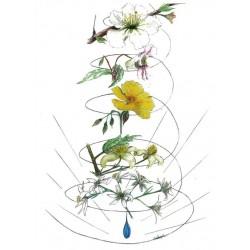 Dessin : Les 5 Fleurs de la solution d'urgence du Dr BACH. de Anne-Marie PUJOL