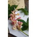 Presse à fleurs - herbier