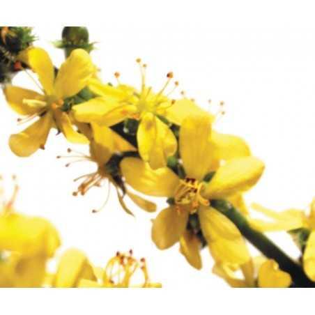 ETIQUETTES AGRIMONY - PLANCHE DE 15