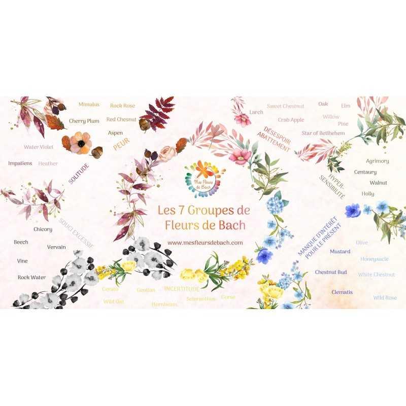 CADEAU: Illustration des 7 groupes d'émotions en Fleurs de Bach