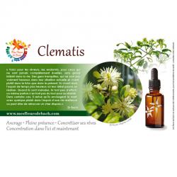 Clematis (Clématite) 20ML BACH ORIGINALS