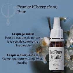 Cherry Plum (Prunier Myrobolan) 10ML FLEURS DE L'ATLAS