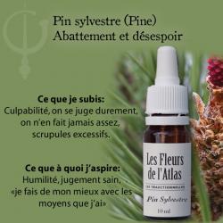 Pine (Pin Sylvestre) 10ML FLEURS DE L'ATLAS