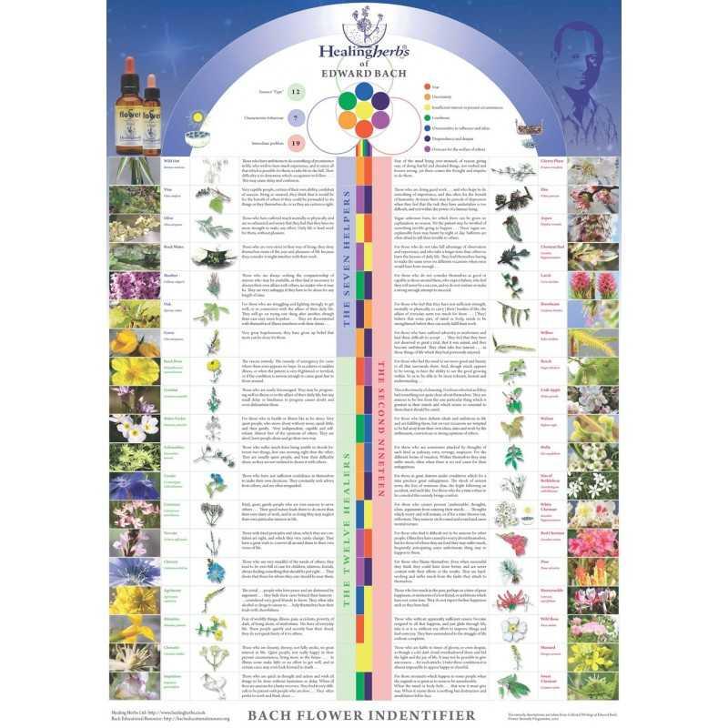 Poster des 38 Fleurs de BACH en anglais par Julian BARNARD