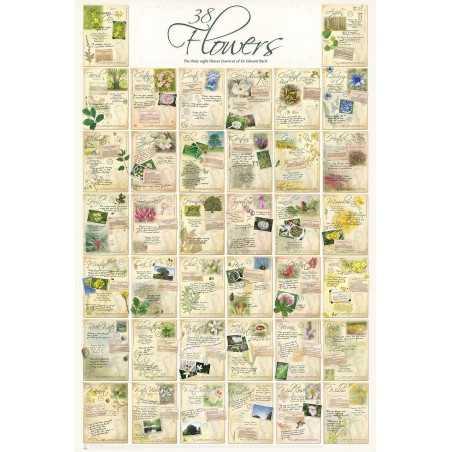 Poster XL des 38 Fleurs de BACH