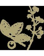 Carnets, cahier et Bloc de prescription à cocher Fleurs de BACH